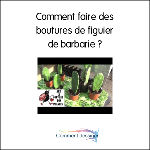 Comment faire des boutures de figuier de barbarie